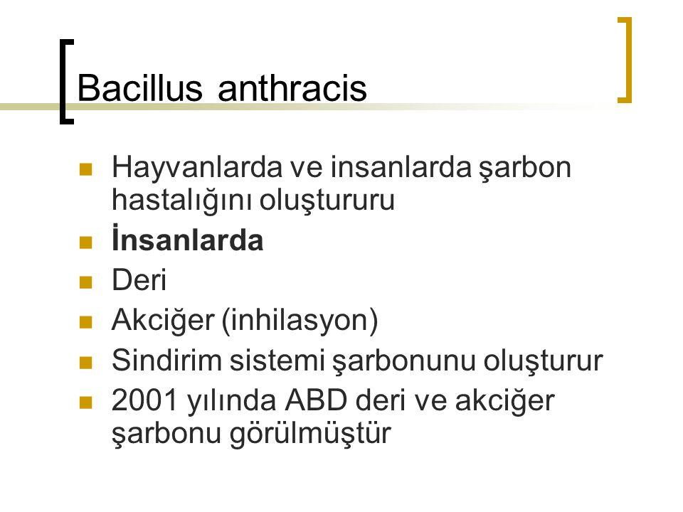 Bacillus anthracis Hayvanlarda ve insanlarda şarbon hastalığını oluştururu. İnsanlarda. Deri. Akciğer (inhilasyon)