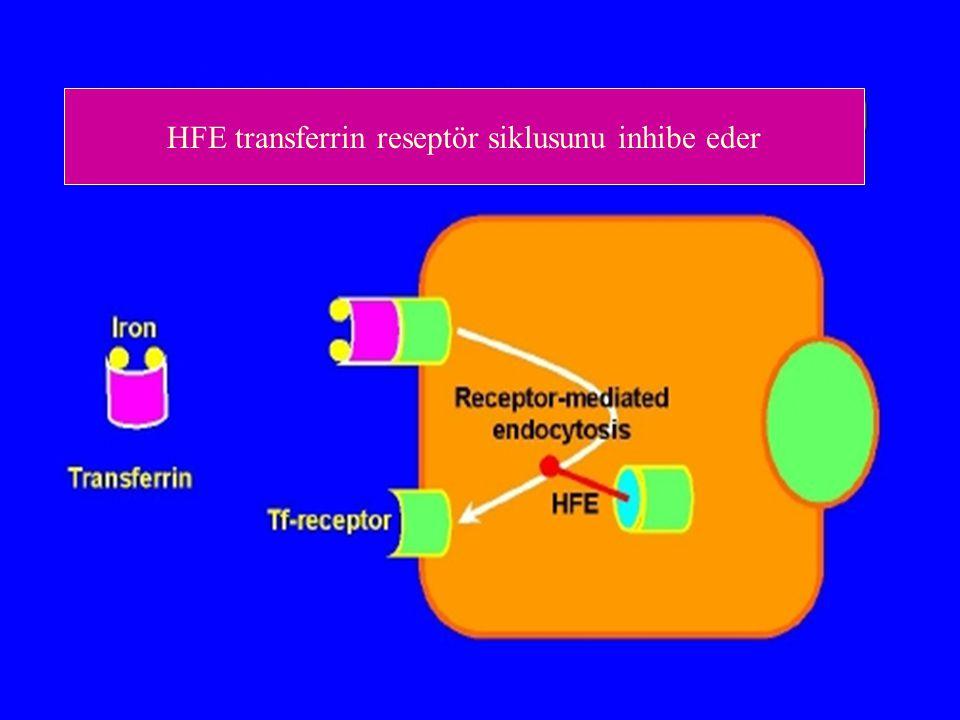 HFE transferrin reseptör siklusunu inhibe eder
