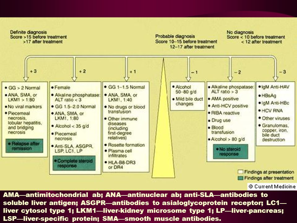 AMA—antimitochondrial ab; ANA—antinuclear ab; anti-SLA—antibodies to soluble liver antigen; ASGPR—antibodies to asialoglycoprotein receptor; LC1—liver cytosol type 1; LKM1—liver-kidney microsome type 1; LP—liver-pancreas; LSP—liver-specific protein; SMA—smooth muscle antibodies.