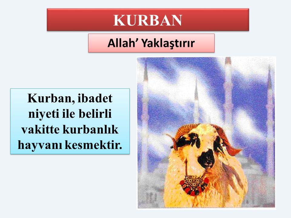 Kurban, ibadet niyeti ile belirli vakitte kurbanlık hayvanı kesmektir.