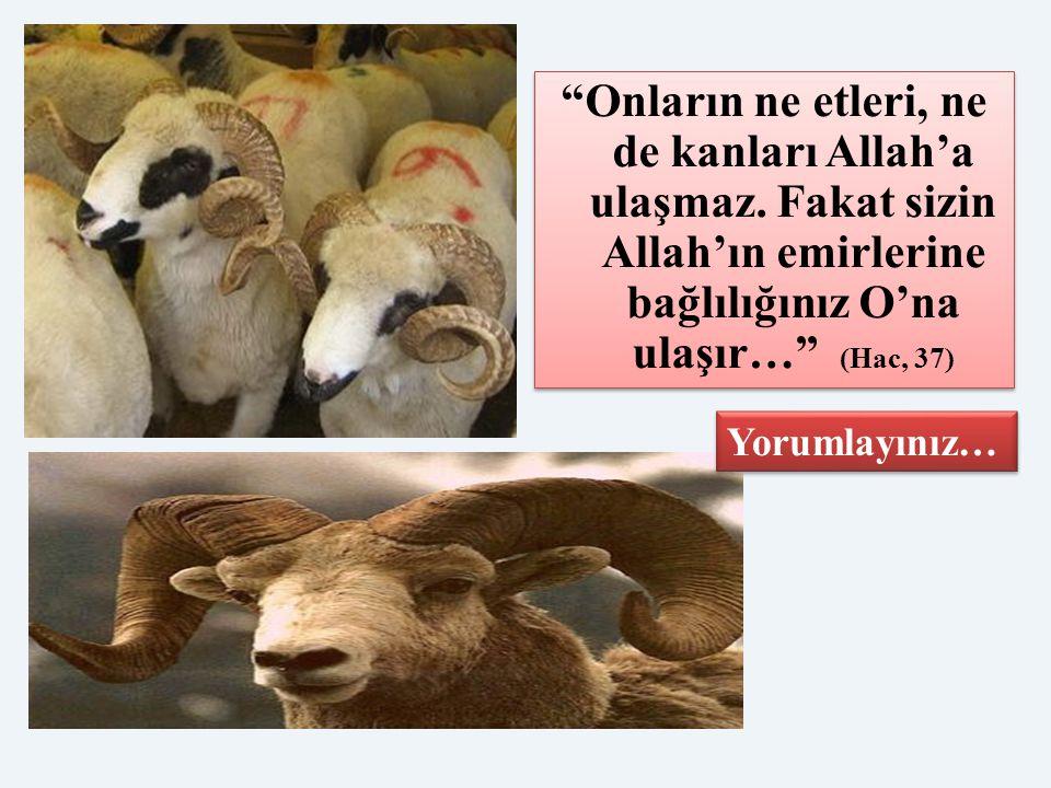 Onların ne etleri, ne de kanları Allah'a ulaşmaz
