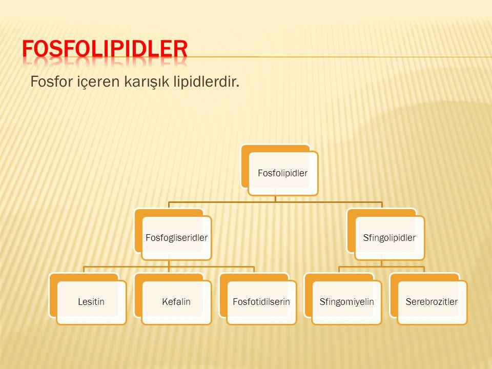 Fosfolipidler Fosfor içeren karışık lipidlerdir. Fosfolipidler