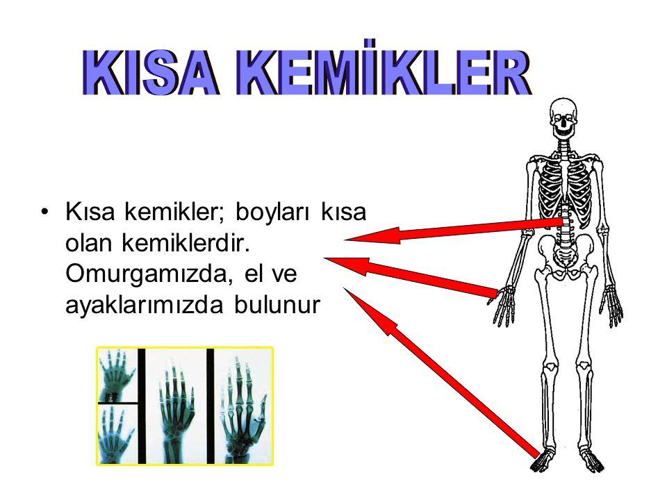 KISA KEMİKLER Kısa kemikler; boyları kısa olan kemiklerdir.