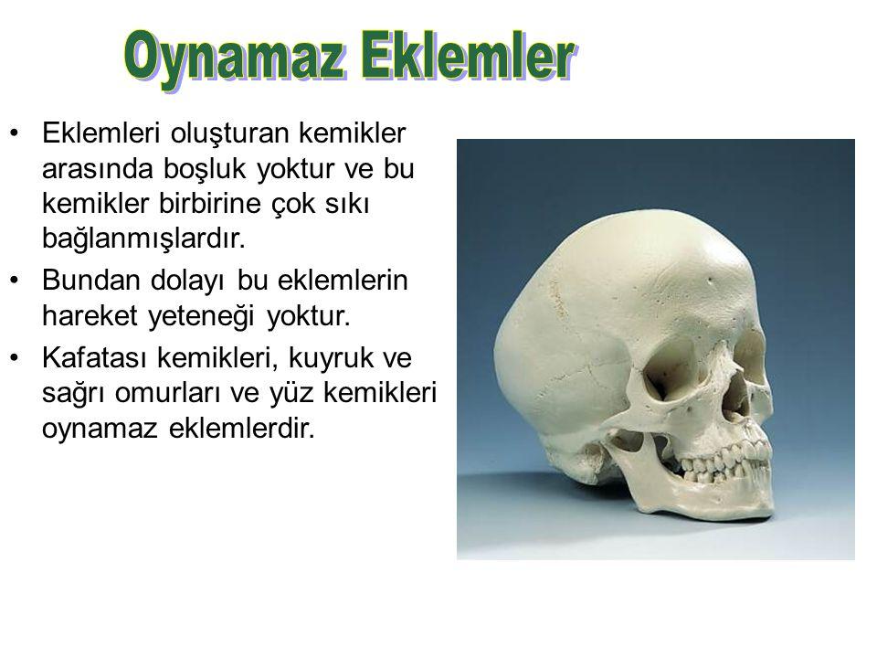 Oynamaz Eklemler Eklemleri oluşturan kemikler arasında boşluk yoktur ve bu kemikler birbirine çok sıkı bağlanmışlardır.
