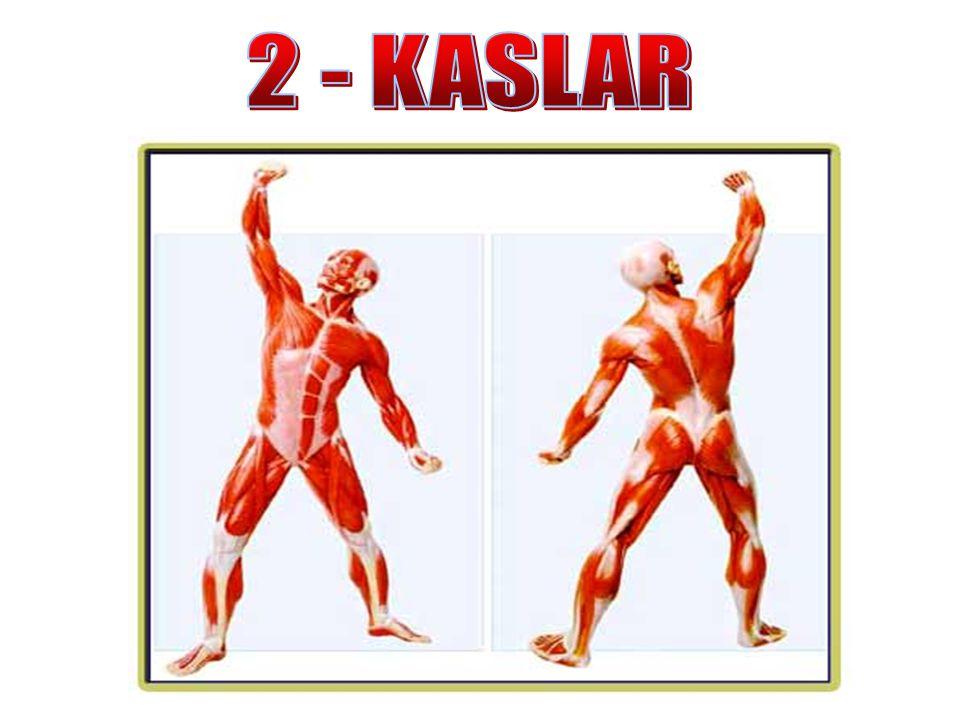 2 - KASLAR