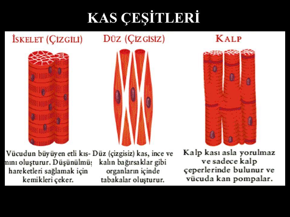 KAS ÇEŞİTLERİ A.H.