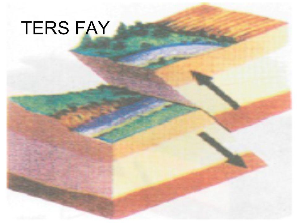 TERS FAY