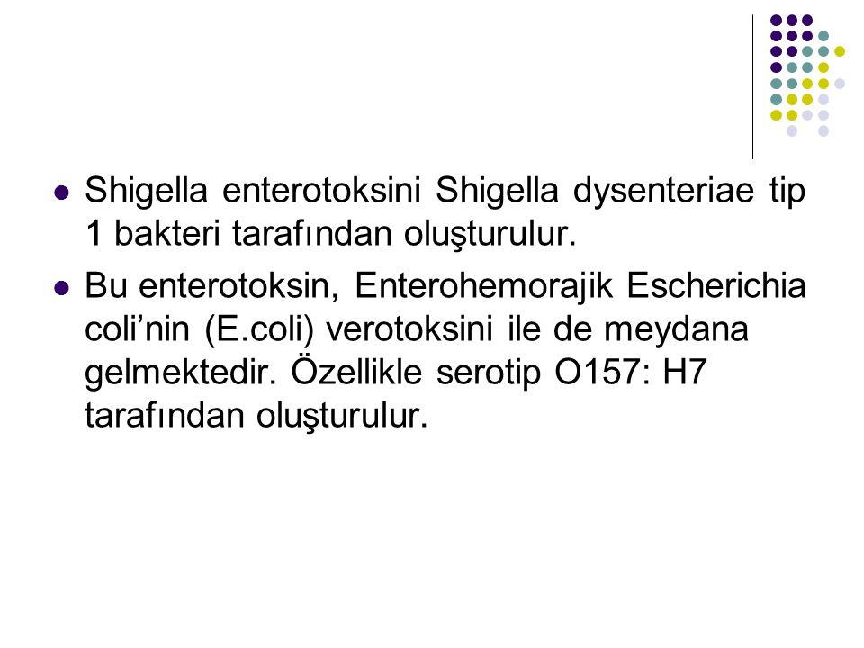 Shigella enterotoksini Shigella dysenteriae tip 1 bakteri tarafından oluşturulur.