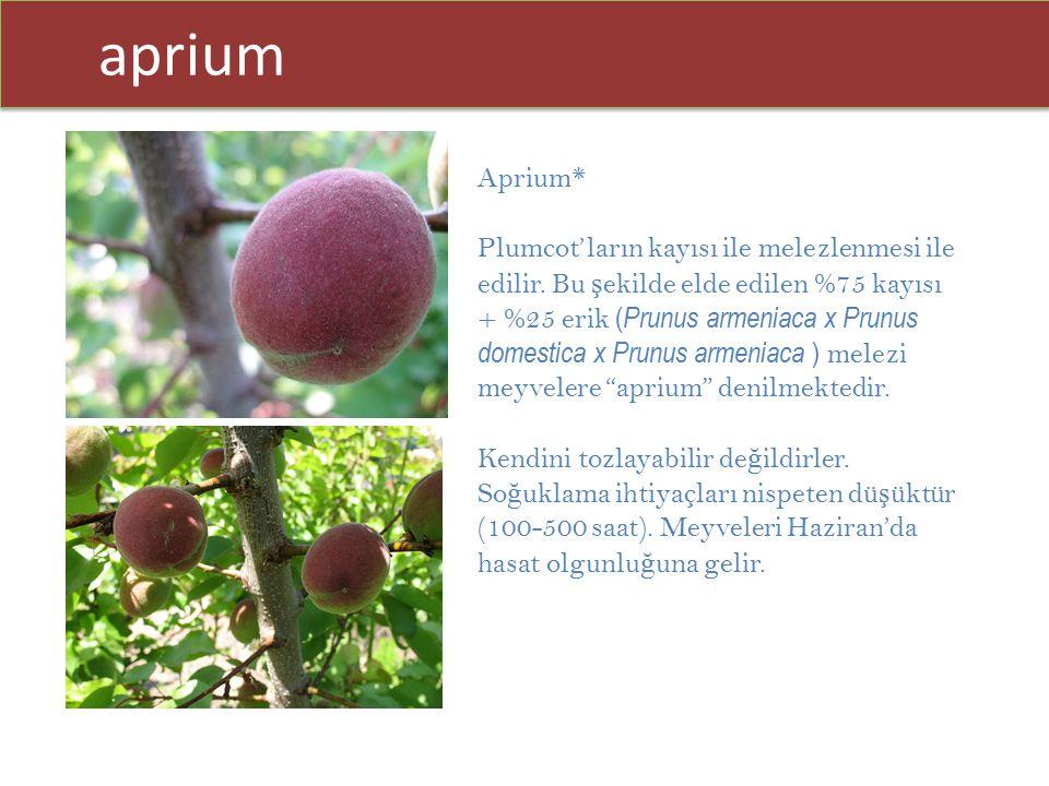 aprium Aprium*