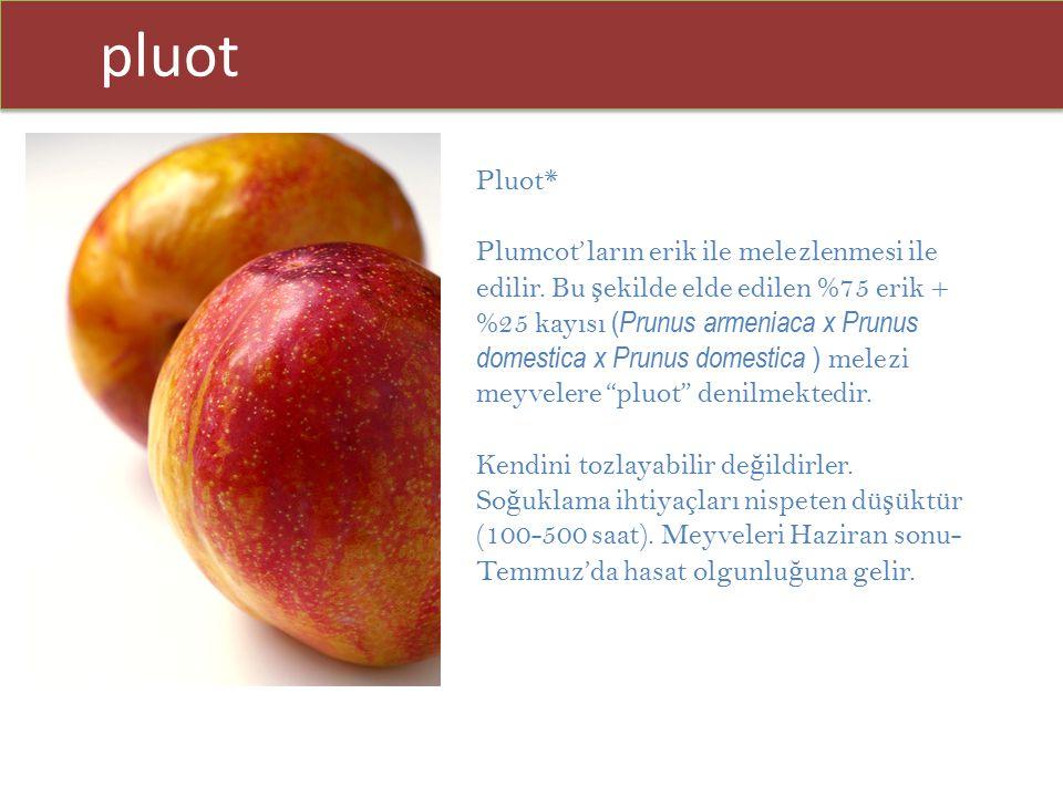 pluot Pluot*