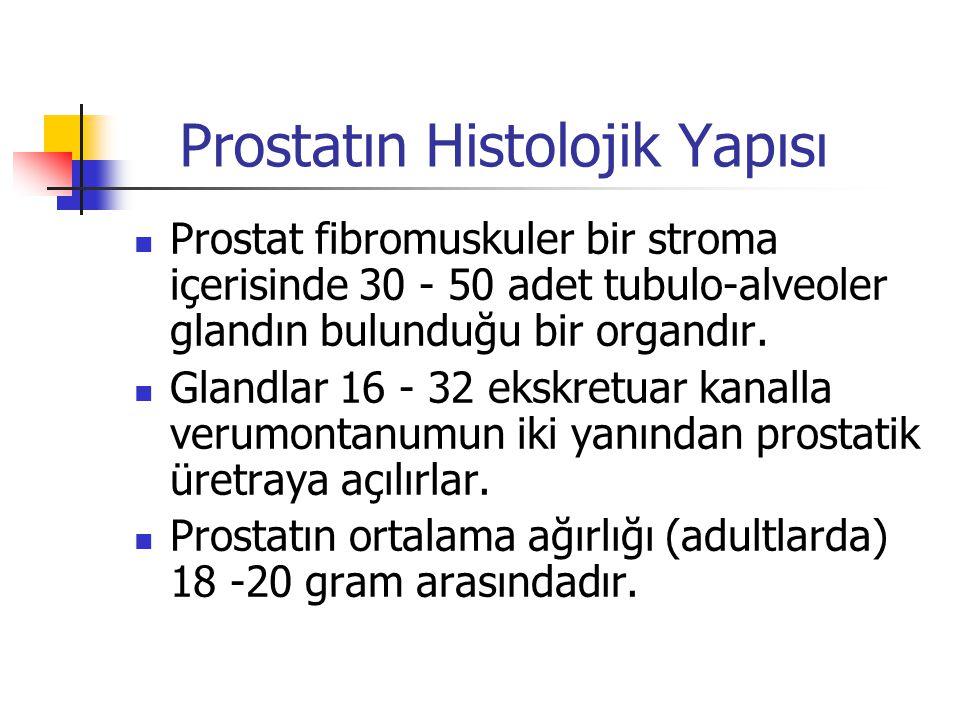 Prostatın Histolojik Yapısı