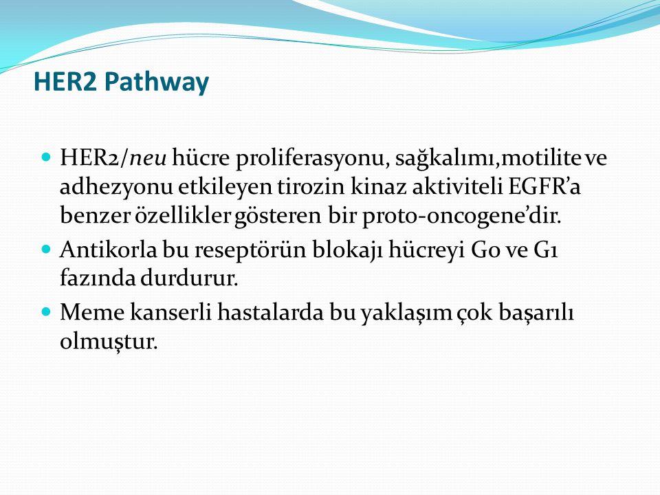 HER2 Pathway