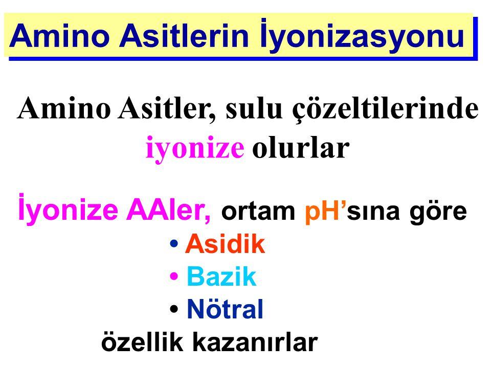 Amino Asitler, sulu çözeltilerinde