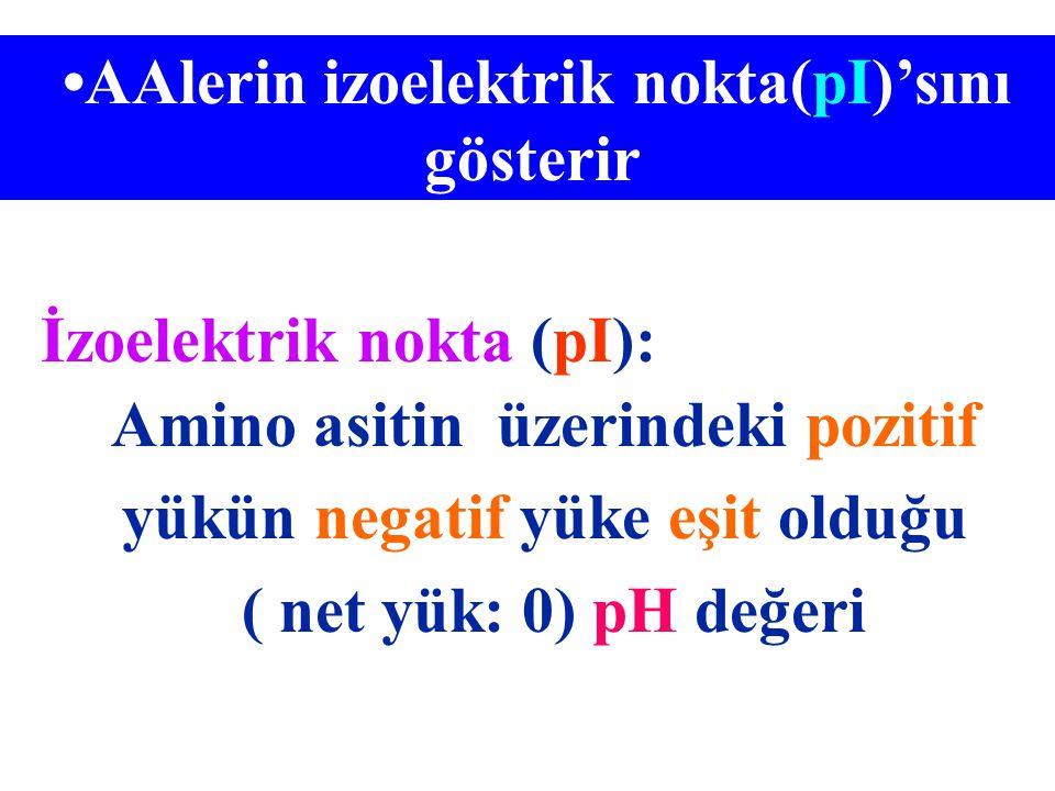 •AAlerin izoelektrik nokta(pI)'sını gösterir