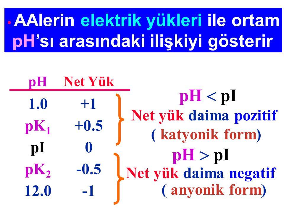 pH'sı arasındaki ilişkiyi gösterir