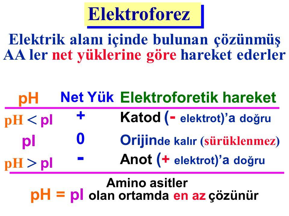 - Elektroforez Elektrik alanı içinde bulunan çözünmüş