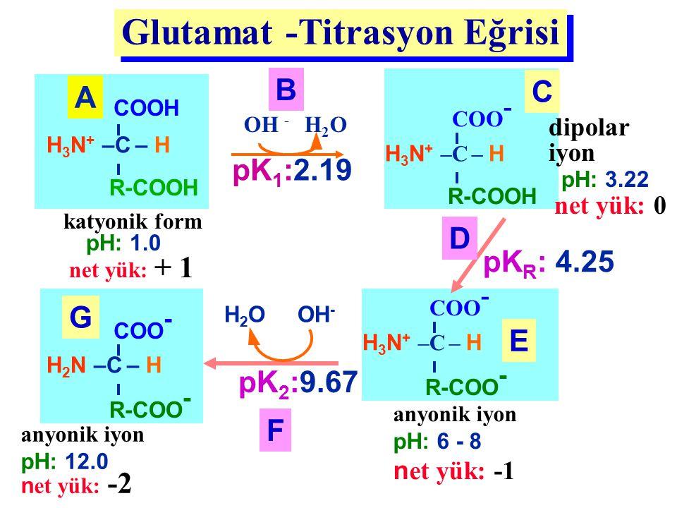 Glutamat -Titrasyon Eğrisi