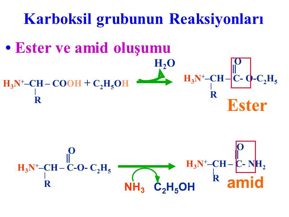 Ester • Ester ve amid oluşumu amid Karboksil grubunun Reaksiyonları