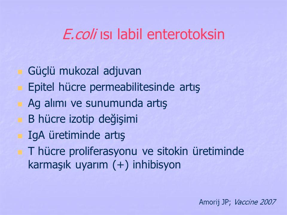 E.coli ısı labil enterotoksin