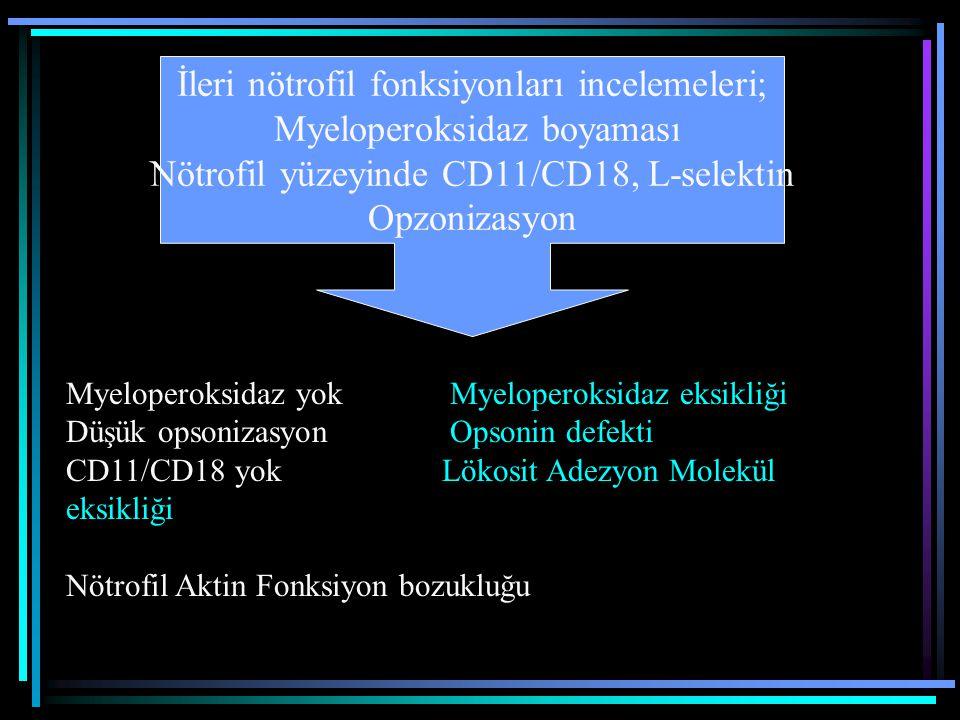 İleri nötrofil fonksiyonları incelemeleri; Myeloperoksidaz boyaması