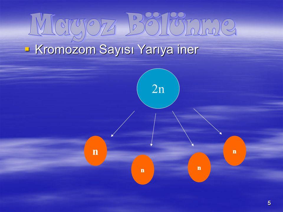 Mayoz Bölünme Kromozom Sayısı Yarıya iner 2n n n n n