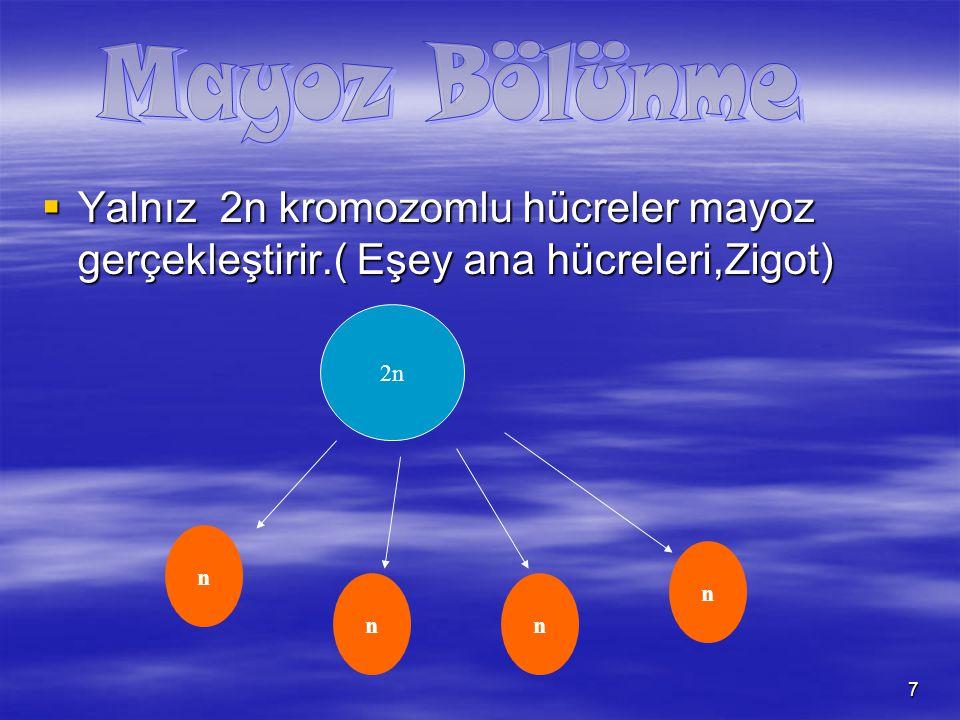 Mayoz Bölünme Yalnız 2n kromozomlu hücreler mayoz gerçekleştirir.( Eşey ana hücreleri,Zigot) 2n. n.
