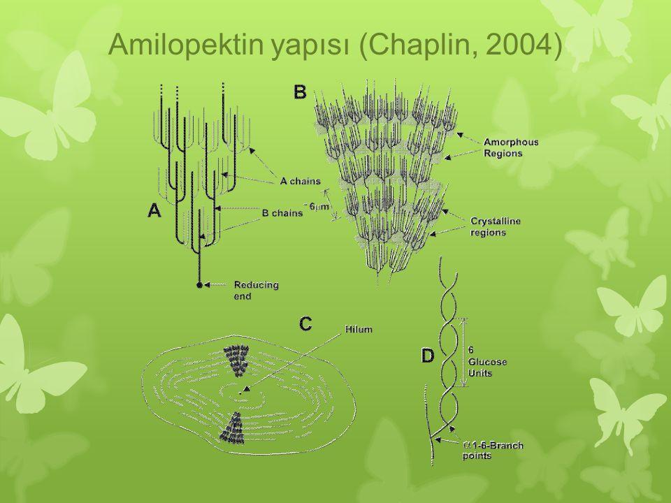 Amilopektin yapısı (Chaplin, 2004)