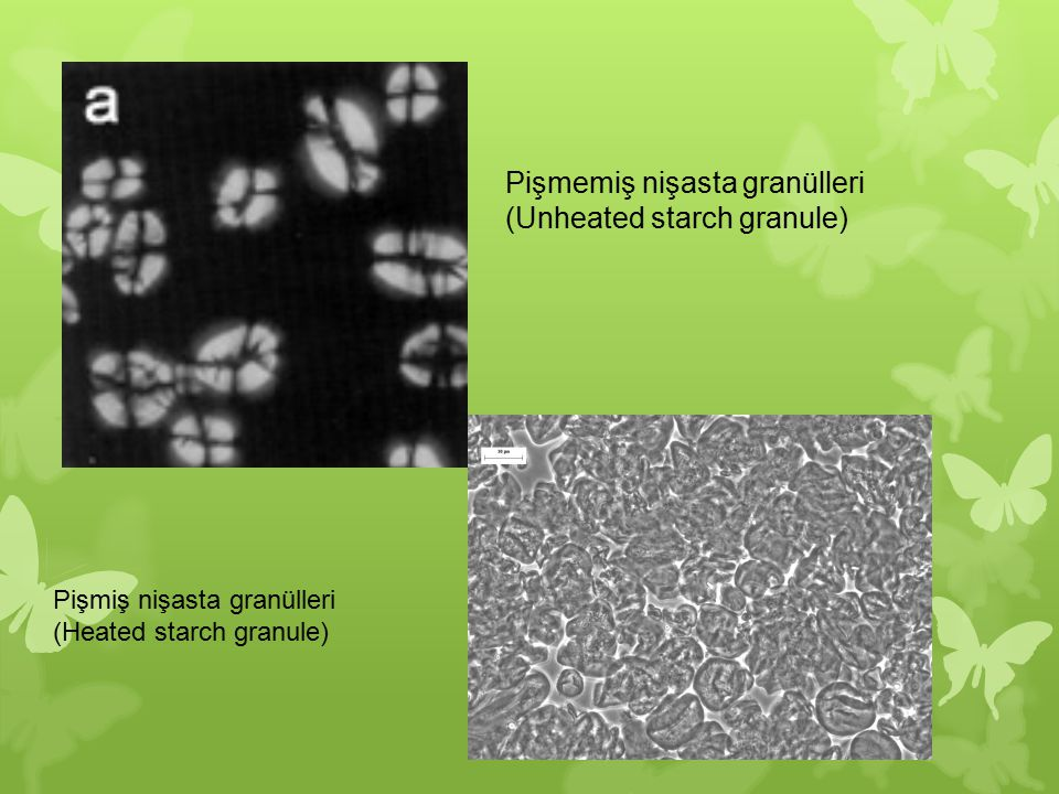Pişmemiş nişasta granülleri (Unheated starch granule)