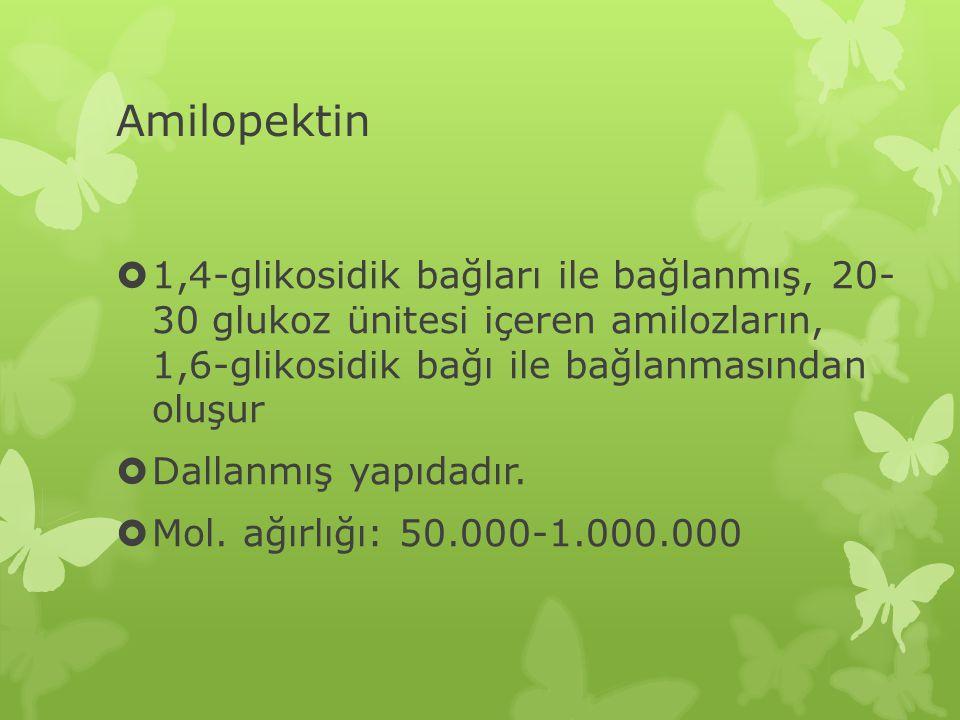 Amilopektin 1,4-glikosidik bağları ile bağlanmış, 20- 30 glukoz ünitesi içeren amilozların, 1,6-glikosidik bağı ile bağlanmasından oluşur.