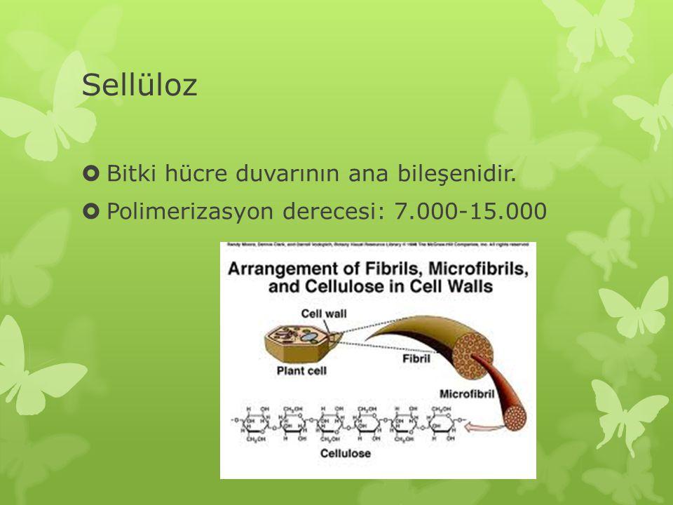 Sellüloz Bitki hücre duvarının ana bileşenidir.