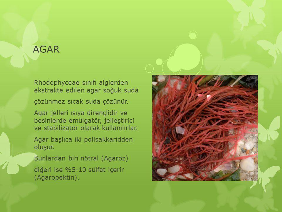 AGAR Rhodophyceae sınıfı alglerden ekstrakte edilen agar soğuk suda