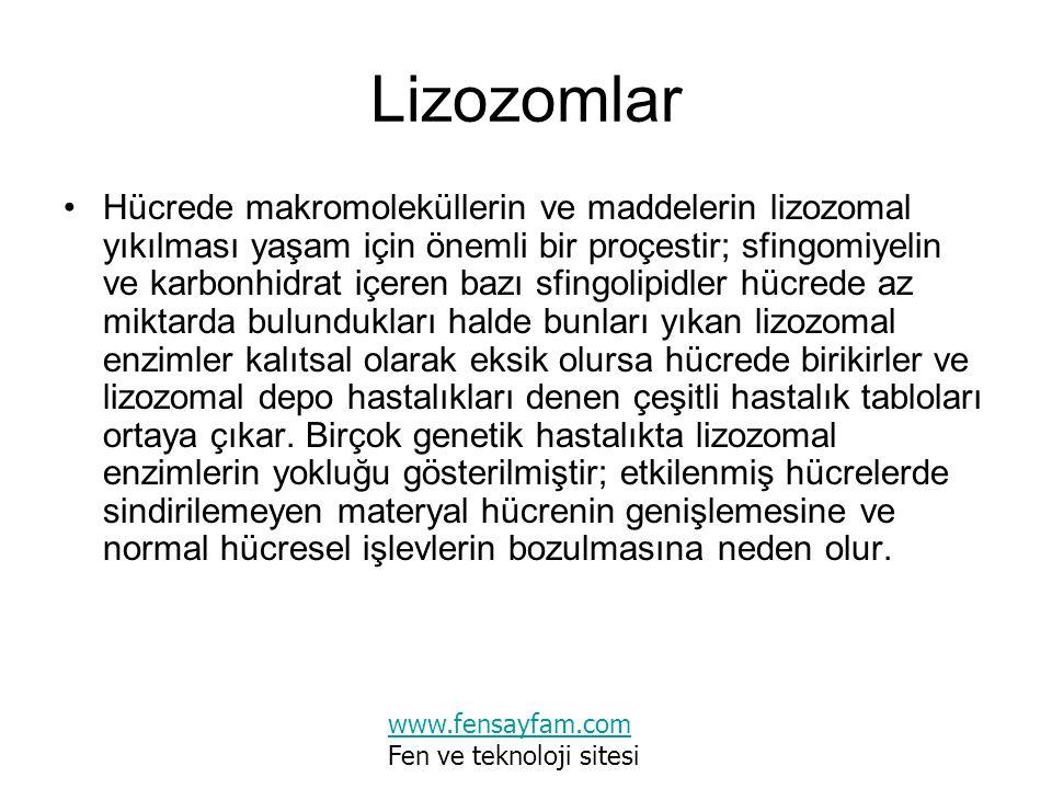 Lizozomlar