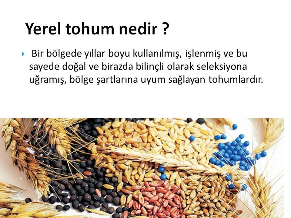Yerel tohum nedir