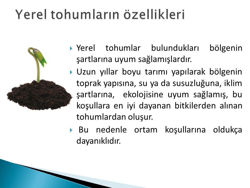 Yerel tohumların özellikleri