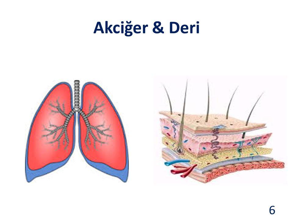 Akciğer & Deri