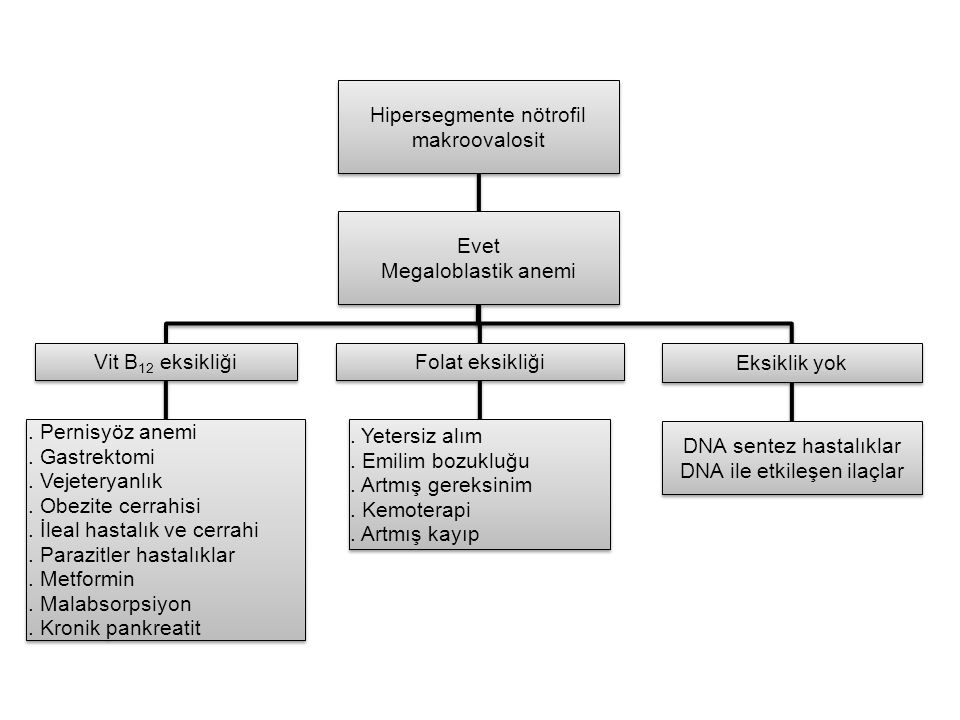 Hipersegmente nötrofil makroovalosit