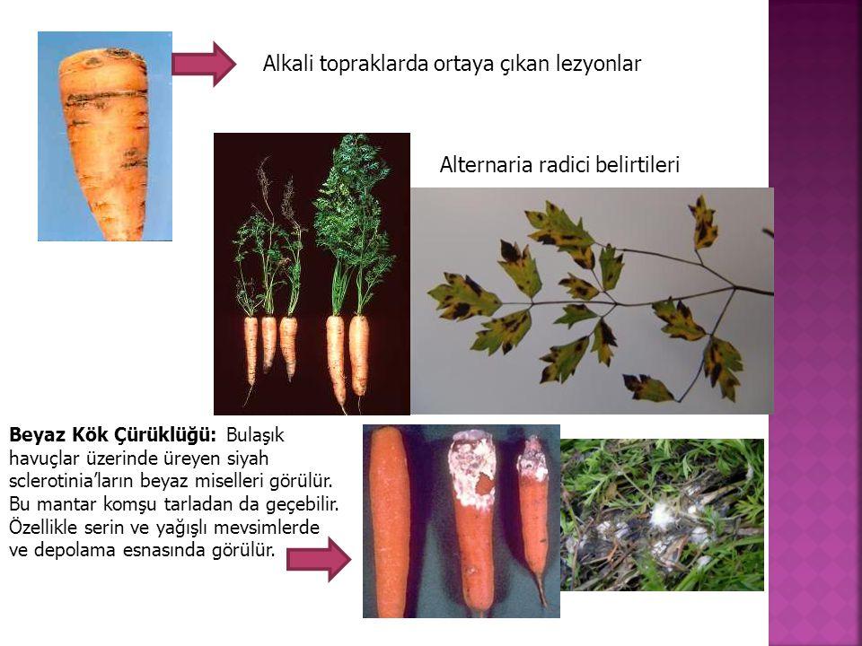 Alkali topraklarda ortaya çıkan lezyonlar