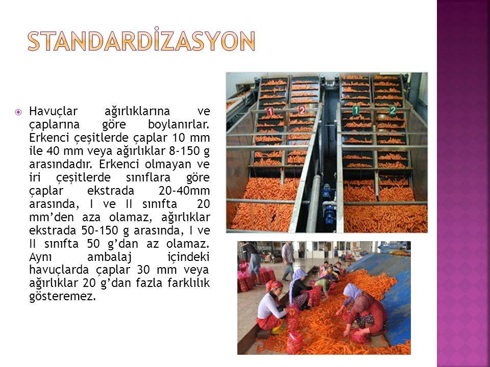 STANDARDİZASYON