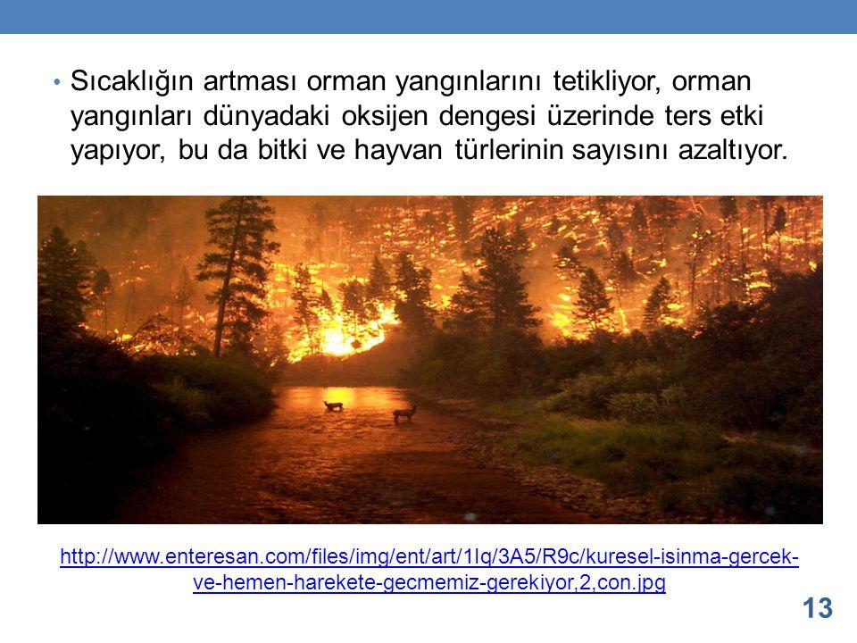 Sıcaklığın artması orman yangınlarını tetikliyor, orman yangınları dünyadaki oksijen dengesi üzerinde ters etki yapıyor, bu da bitki ve hayvan türlerinin sayısını azaltıyor.