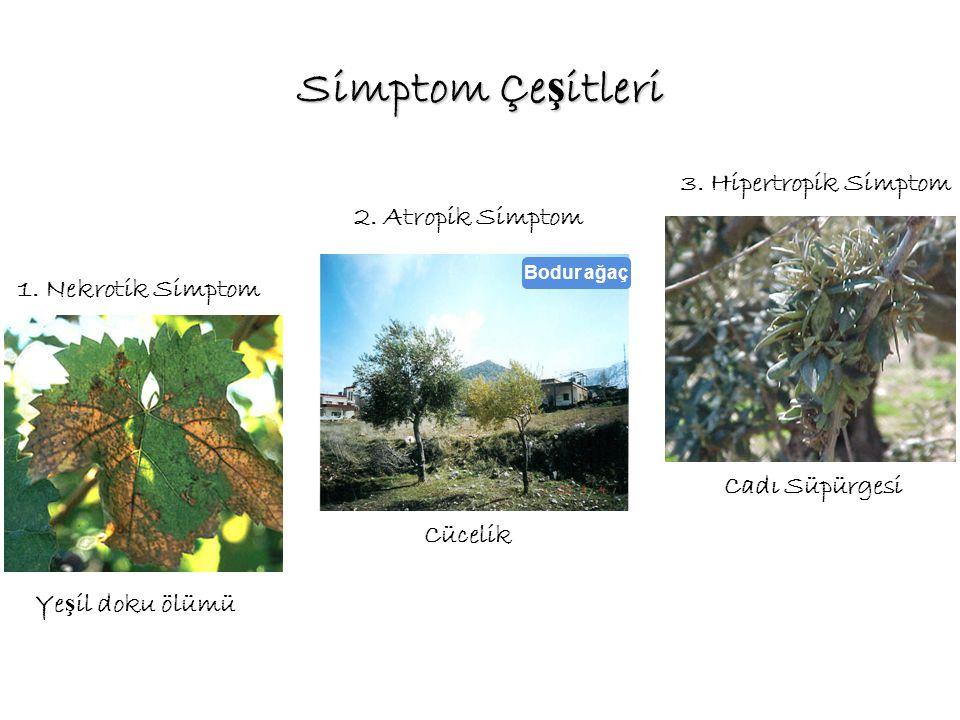 Simptom Çeşitleri 3. Hipertropik Simptom 2. Atropik Simptom