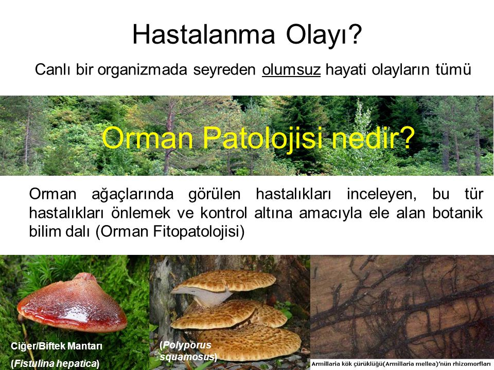Orman Patolojisi nedir