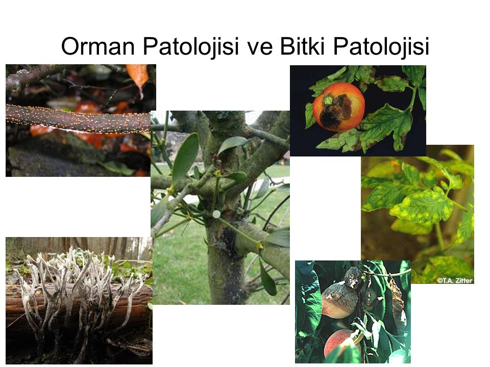 Orman Patolojisi ve Bitki Patolojisi