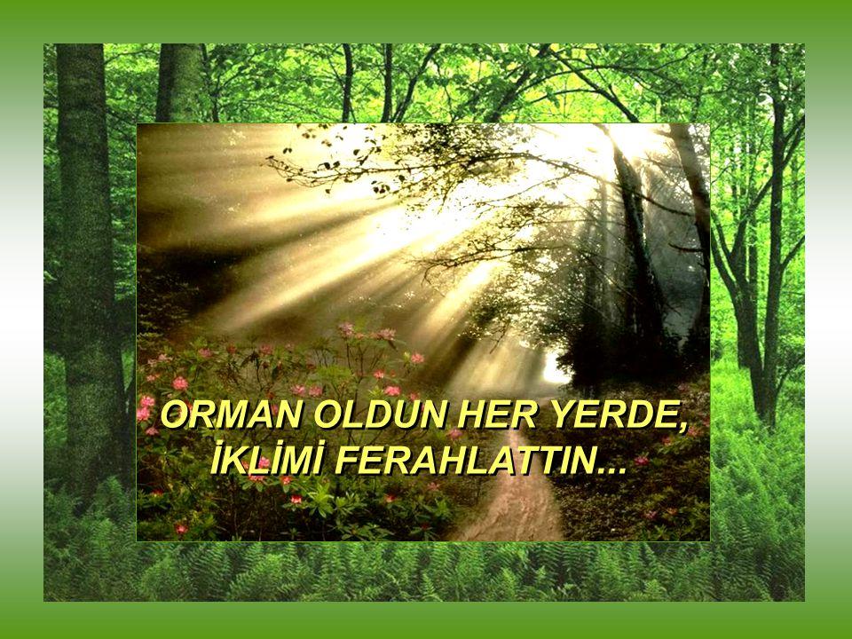 ORMAN OLDUN HER YERDE, İKLİMİ FERAHLATTIN...