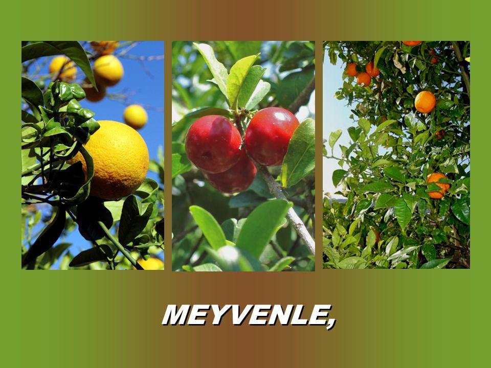 MEYVENLE,