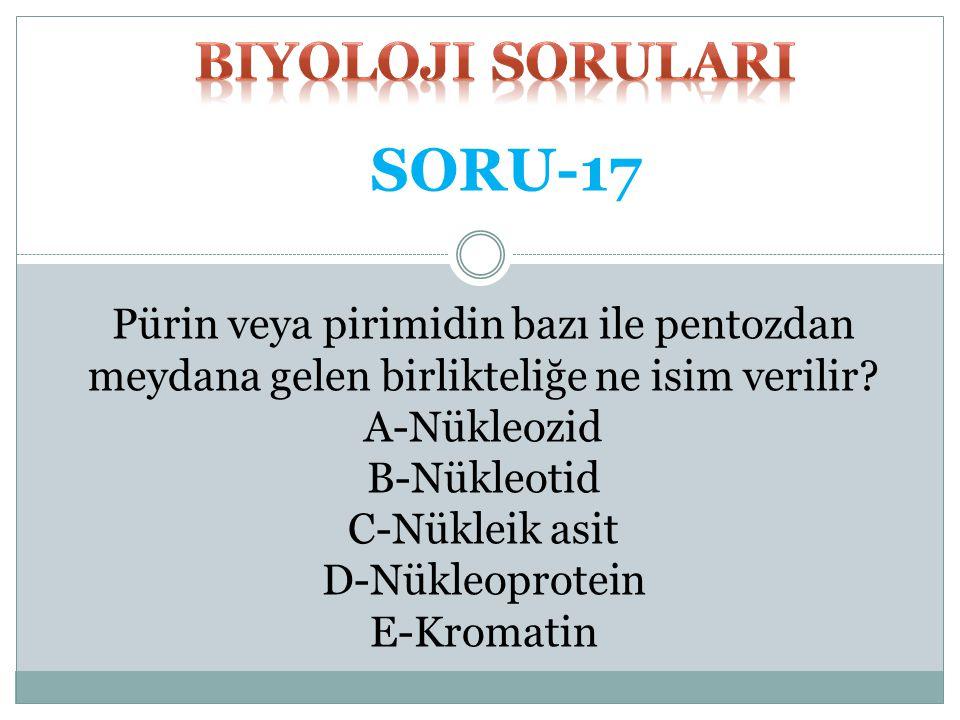 SORU-17 biyoloji SORULARI