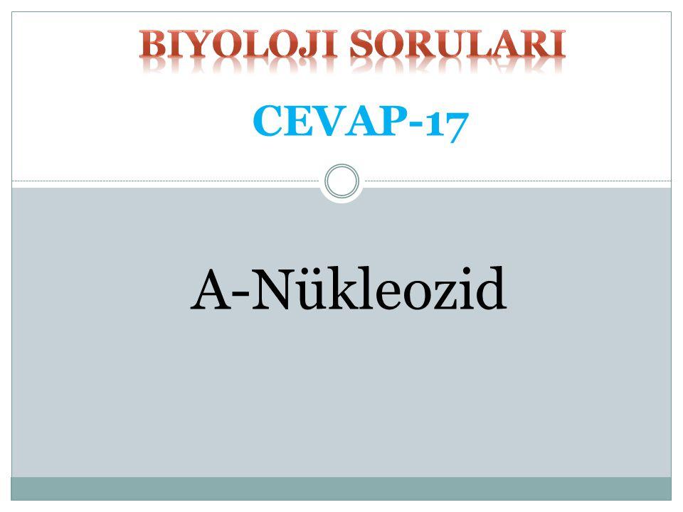 biyoloji SORULARI CEVAP-17 A-Nükleozid