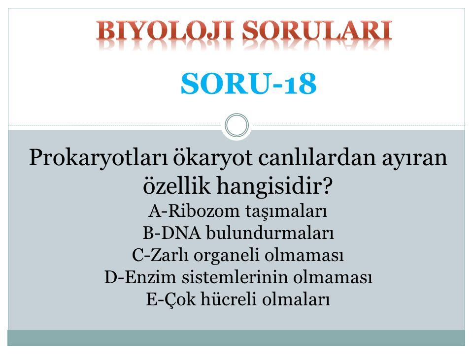 SORU-18 biyoloji SORULARI
