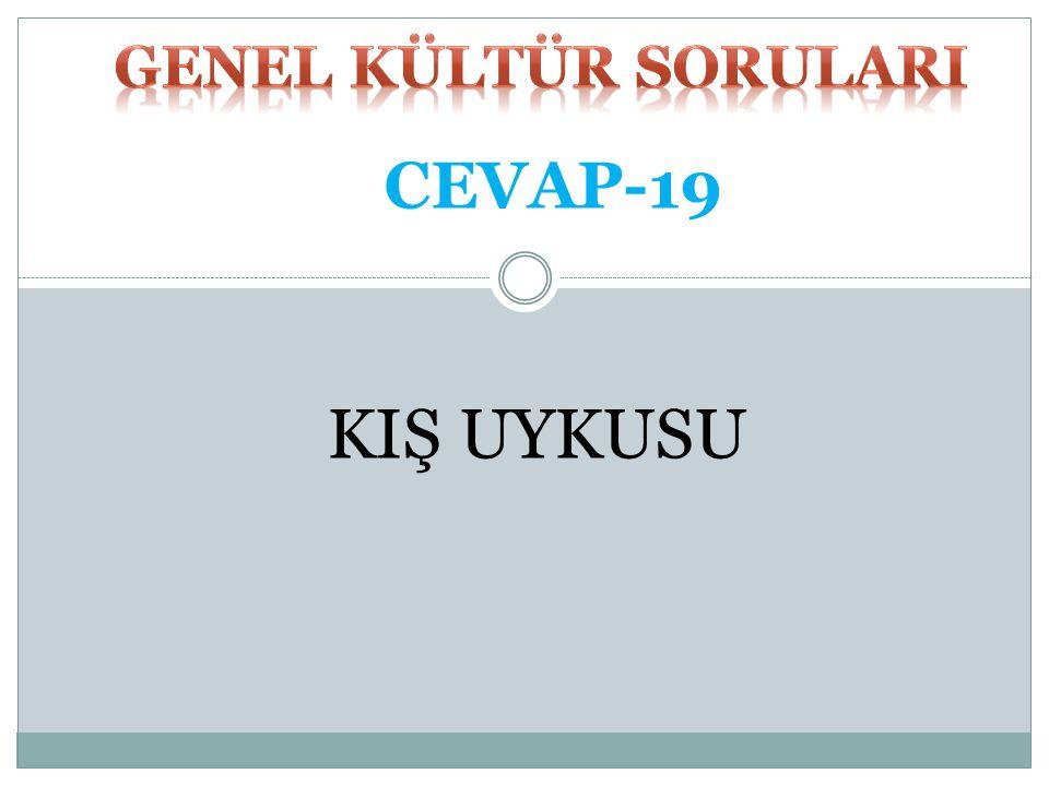 GENEL KÜLTÜR SORULARI CEVAP-19 KIŞ UYKUSU