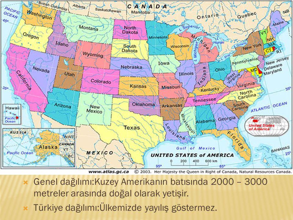 Genel dağılımı:Kuzey Amerikanın batısında 2000 – 3000 metreler arasında doğal olarak yetişir.