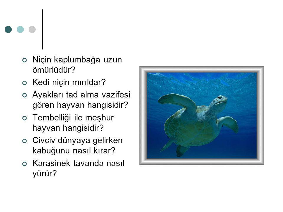 Niçin kaplumbağa uzun ömürlüdür